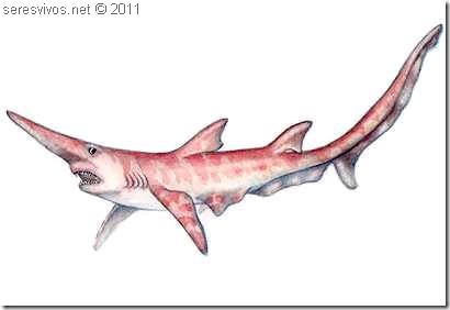 Scapanorhynchus owstonl